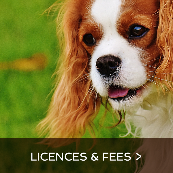 Licences and fees